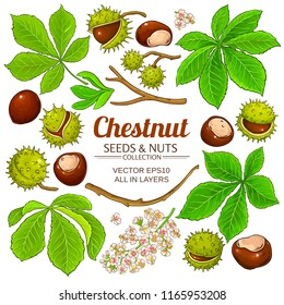 chestnut vector isolated