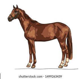 Chestnut young horse standing still not moving watching