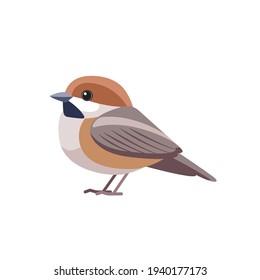 Chestnut-backed Chickadee (Poecile rufescens). Sparrow bird cartoon flat style beautiful character of ornithology, vector illustration isolated on white background.