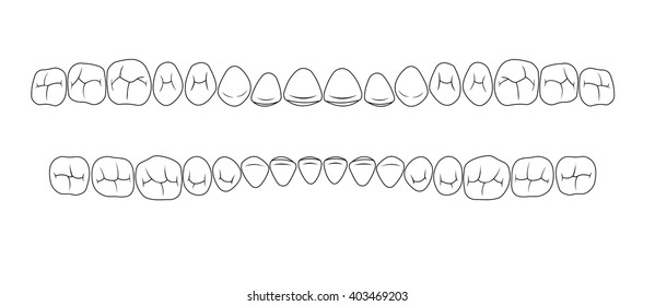 chewing surface of teeth, fissures