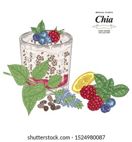 Chia plant with cocktail glass hand drawn. Colorful chia flowers, seeds, raspberry, lemon, fresh mint and blueberry isolated on white background. Healthy food collection. Vector illustration.