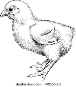 chick realistic drawing