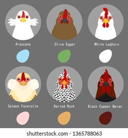 chicken breeds and egg colors set