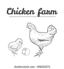 chicken and chick, chickens, hand drawn chicken, chicken farm, vector illustration sketch