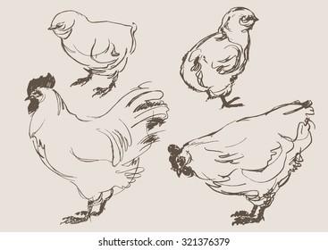 chicken cock vector, hand draw sketch