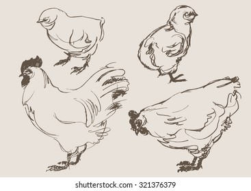 Chicken Drawing Images Stock Photos Vectors Shutterstock