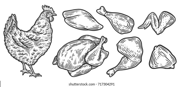Chicken cuts, hen parts. Domestic bird meat vector set illustration. Engraving sketch style isolated. Traditional organic food.