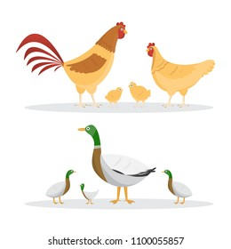 Chicken and ducks. set of animals inside farm isolated on white background. Vector illustrations
