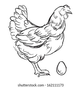 Chicken and egg in vector