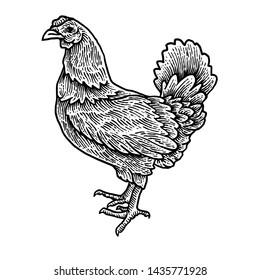 Chicken engraving detail design animal