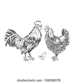 Chicken family. Badges and design elements for the chicken manufacturing.