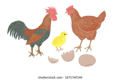 Chicken family isolated set. Drawn cartoon rooster, hen, newborn chick, egg and eggshell. Poultry vector illustration.