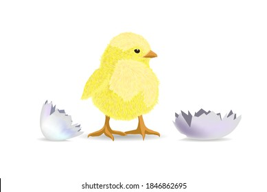 The chicken hatched from the shell. Vector illustration