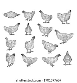 Chicken hen polygonal lines illustration. Abstract vector hen on the white background