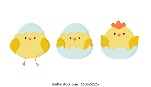 Chicken icon set. A sweet yellow Easter chickens is sitting waiting for Easter. Vector illustration in simple flat style. Colorful isolated logo, badge, illustration. Ideal for decoration and design.