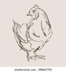 chicken vector, hand draw sketch