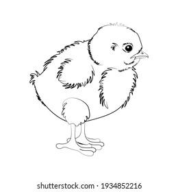 Chicken vector illustration outline on the white background.