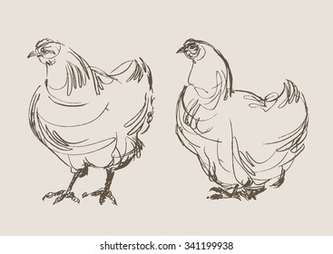 chickens vector, hand drawn sketch