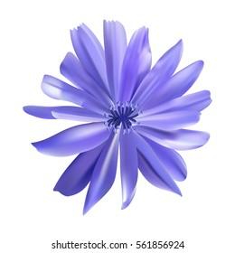 Chicory purple flower vector illustration. Blue daisy. Mesh. Isolated.
