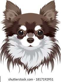 chihuahua dog vector portrait illustration