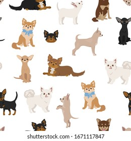 Chihuahua dogs seamless pattern. Different varieties of coat color set.  Vector illustration