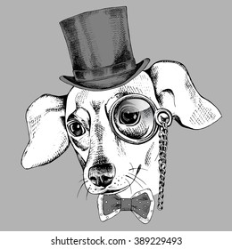 Chihuahua portrait  in a hat bowler and with monocle. Vector illustration.
