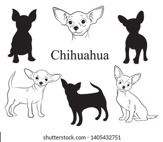 Chihuahua set. Collection of pedigree dogs. Black and white illustration of a chihuahua dog. Vector drawing of a pet. Tattoo.