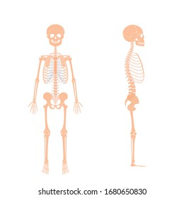 Child boy skeleton anatomy in front and side profile view. Vector isolated flat illustration of skull and bones in human kid body. Halloween, medical, educational or science banner