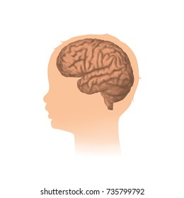 Child head with brain. Vector mecdical illustration. White background.