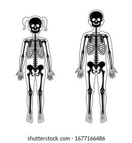 Children boy and girl skeleton anatomy front view. Vector isolated flat illustration of skull and bones in human kid body. Halloween, medical, educational or science banner