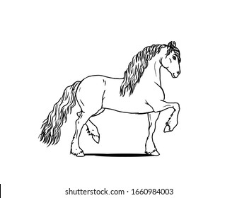 Children coloring book with line art Frisian horse character. Use it for info graphic, pachage or poster design.
