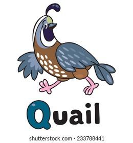 Children vector illustration of little funny quail running on the field. Alphabet Q