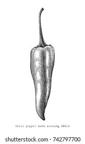 Chili peper hand drawing engraving style, vintage clip art