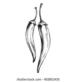 chili pepper, vector illustration of hot peppers