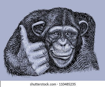 Chimpanzee drawing vector. Animal artistic drawing, use for any design you want.