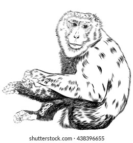 chimpanzee sketch images stock photos vectors shutterstock