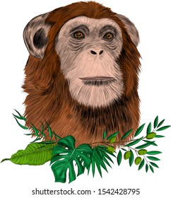 chimpanzee monkey brown with palm leaves and olive branches