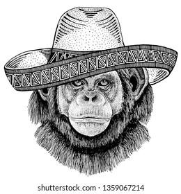 Chimpanzee Monkey wearing traditional mexican hat. Classic headdress, fiesta, party.