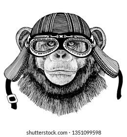 Chimpanzee, monkey wild biker animal wearing motorcycle helmet. Hand drawn image for tattoo, emblem, badge, logo, patch, t-shirt.