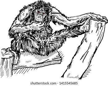 A chimpanzee resting on a tree trunk. Hand drawn vector illustration.