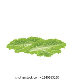 Chinese cabbage isolated on background. Vector illustration.