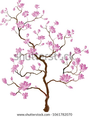 chinese cherry cherry blossoms stock vector royalty free