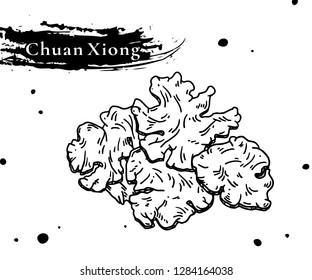 Chinese herbal medicine. sliced of dry Szechuan Lovage root. Ligusticum chuanxiong Hort. Compendium of Materia Medica.TCM health.Nourishing .Blood circulation. Medicinal diet.Diet therapy