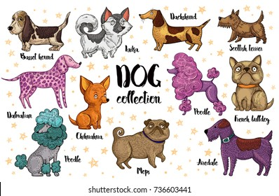 The Chinese new year 2018. Collection of the vector, hand drawing dogs. Colorful cute dogs, symbol of  2018 new year.