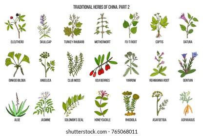 Chinese traditional medicinal herbs. Hand drawn vector set, part 2