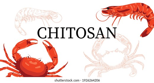 Chitosan is a dietary supplement. For weight loss and weight control. From the shells of crustaceans, shrimp and crabs. Chitin, polysaccharide.