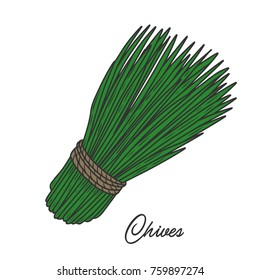 Chives herb spice leaves, a bunch of herb, hand drawn vector sketch illustration