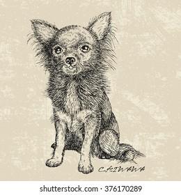 Chiwawa dog drawing sketch, vector illustration