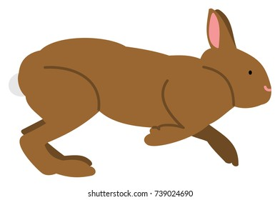 Chocolate colored bunny rabbit with pink nose