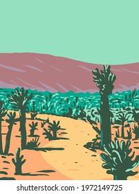 Cholla Cactus Garden Nature Trail near Desert Hot Springs located in Joshua Tree National Park in California